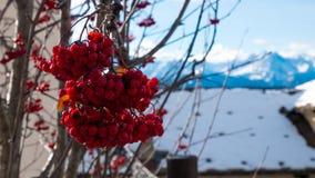 Rode bessen met sneeuwachtergrond stock afbeelding