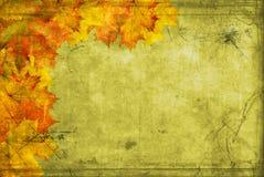 Rode bladenesdoorn op canvas Stock Foto