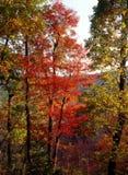 Rode bladeren Stock Foto