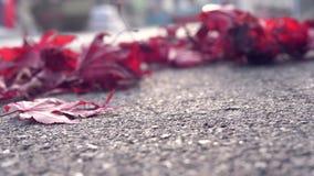 Rode Bladeren in de Herfst stock footage
