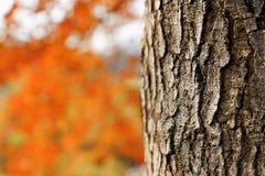 Rode bladeren in de herfst Stock Foto's