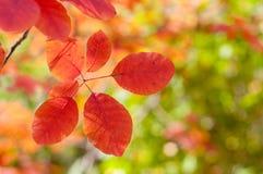 Rode bladeren die op de boom hangen Royalty-vrije Stock Afbeelding