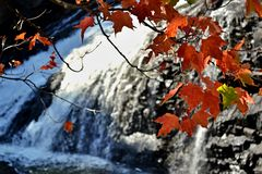Rode bladeren met waterdalingen en stroomversnelling op achtergrond, Kabir Koub Royalty-vrije Stock Afbeeldingen