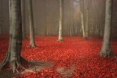 Rode bladeren in nevelig bos Royalty-vrije Stock Afbeeldingen