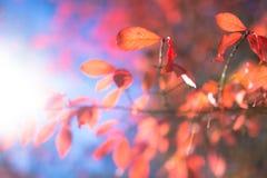 Rode Bladeren op Blauwe Hemel Royalty-vrije Stock Afbeelding