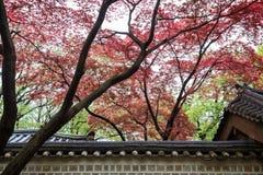 Rode bladeren op bomen boven gebouwen stock foto's