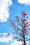 Rode Bladeren op een Kleine Boom tijdens Daling Stock Foto's