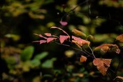 Rode bladeren op groene achtergrond royalty-vrije stock foto's