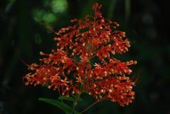 rode bloem Royalty-vrije Illustratie