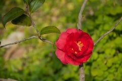 Rode bloem aginst de achtergrond Stock Foto
