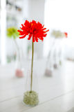 Rode bloem als decoratieve elementen stock foto's
