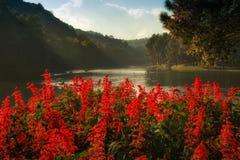 Rode bloem bij Steek -steek-ung Stock Foto