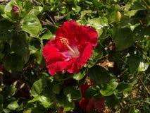 Rode bloem in de botanische tuin stock foto