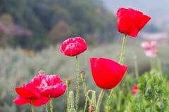 Rode bloem in de groene tuin Stock Foto's