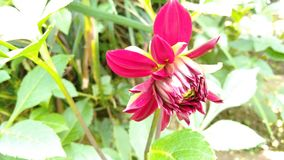 Rode bloem in de tuin royalty-vrije stock fotografie