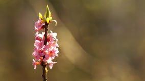 Rode bloem in de zon stock footage