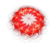 Rode bloem die op witte achtergrond wordt geïsoleerdg Stock Foto's