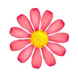 Rode bloem die op witte achtergrond wordt geïsoleerdg Mooie bloesem met geel stuifmeel royalty-vrije stock foto's