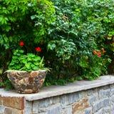 Rode bloem in een pot Royalty-vrije Stock Afbeeldingen