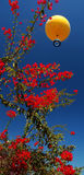 Rode bloem en gele ballon Royalty-vrije Stock Afbeelding