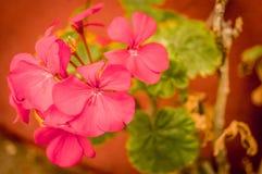 Rode bloem en groene bladeren royalty-vrije stock afbeelding