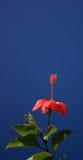 Rode bloem en hemel royalty-vrije stock afbeelding