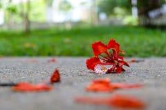 Rode bloem gevallen op de vloer in een bos Royalty-vrije Stock Afbeelding