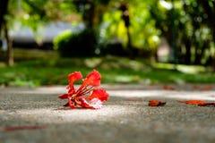 Rode bloem gevallen op de vloer in een bos Stock Foto's