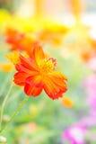 Rode bloem in het park, kleurrijke bloem Royalty-vrije Stock Afbeeldingen
