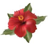 Rode bloem-hibiscus rosa Stock Fotografie