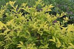 Rode Bloem met blad dichte mening in tuin die ontzagwekkend kijken royalty-vrije stock foto's