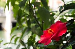 Rode bloem met bladeren Stock Afbeelding
