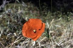 Rode bloem met een insect stock afbeelding