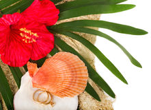 Rode bloem met twee versleten gouden ringen Royalty-vrije Stock Fotografie