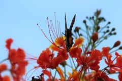 Rode bloem met vlinder Stock Foto's
