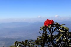 Rode bloem op bovenkant stock afbeelding