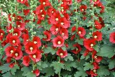 Rode bloem op de muur stock afbeelding