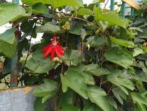 Rode bloem op groen stock fotografie