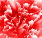 Rode bloemachtergrond Stock Foto