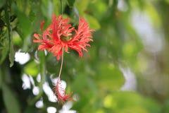 Rode bloemachtergrond Royalty-vrije Stock Fotografie