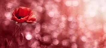 Rode bloembanner Royalty-vrije Stock Foto's