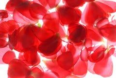 Rode bloemblaadjes Royalty-vrije Stock Foto