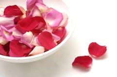 Rode bloemblaadjes Royalty-vrije Stock Foto's