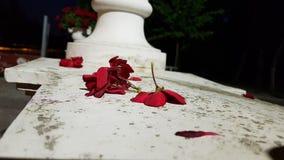 Rode bloemblaadjes bij het witte op stang jagen stock afbeeldingen