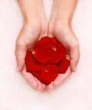 Rode bloemblaadjes in handen Stock Foto's