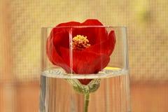 Rode bloemdecoratie Royalty-vrije Stock Fotografie