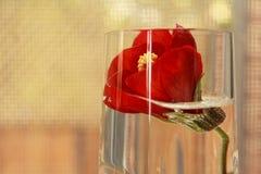 Rode bloemdecoratie Royalty-vrije Stock Foto's