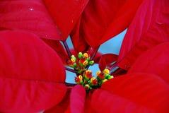 Rode Bloemen stock afbeeldingen