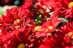 Rode bloemen Royalty-vrije Stock Foto