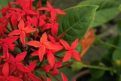 Rode bloemen Royalty-vrije Stock Foto's